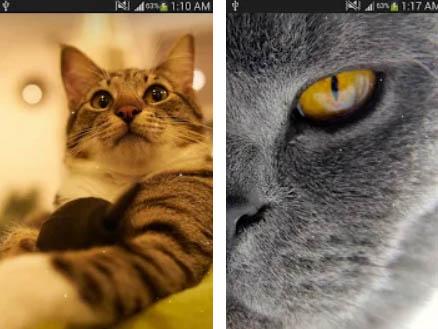 Kočka živé tapety